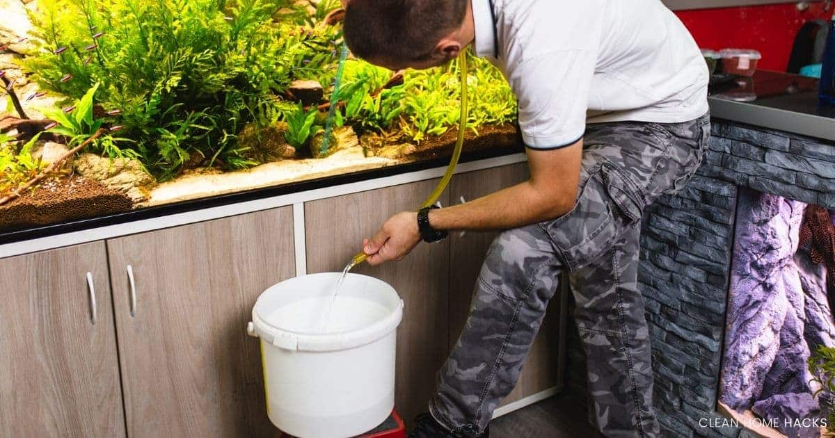 man changing aquarium water using siphon for cleaning fish tank with vinegar
